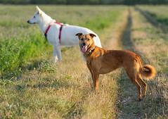 _F014889 (b.kunst17) Tags: nikon nikkor d3s 70200 vrii hund hunde tier tiere haustier haustiere animal animals dog dogs pet pets