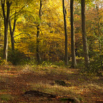The Great Wood - Blickling, Norfolk