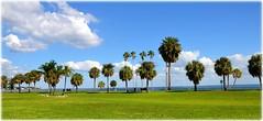 Northshore Park - St Petersburg, FloridaDSC_9809 (lagergrenjan) Tags: northshore park st petersburg florida tampa bay palms