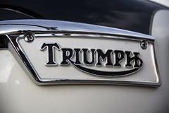 Triumph (michael_hamburg69) Tags: hamburg germany deutschland hansestadt motorrad triumph 6t thunderbird classicbike vintage motorcycle 19601962 doppeltesbrustrohr gelötetefittings geschraubtesheck motor 650ccm silkshiftgetriebe logo emblem 1961