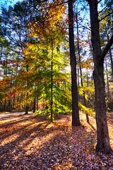 DSC09128-30_HDR (Capt Kodak) Tags: autumn chattahoocheerivernationalrecreationarea fall hdrefexpro2 madefrom3images medlockbridgepark nationalparkservice nikcollectionbygoogle niksoftware photomerge