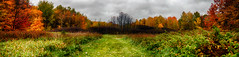 Fading Fall (flashfix) Tags: october222016 2016 2016inphotos nikond7000 nikon ottawa ontario canada 40mm woods panorama fall autumn trees nature clouds rainy colouful merbleue leaves leaf grass mothernature