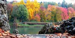 """Automne : Les Couleurs sur le fleuve PO (""""AMAR"""") Tags: autunno beautifullandscapes colori coloridellautunno fiumepo fiume fogliemorte fogliesecche giallo verdi rosso sassi piemonte paessaggio torino italy italia"""