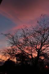 Inspiration is everywhere (WorldClick) Tags: artistry art sky life clouds beauty perspective orange grey skies trees shadows blue cloudy moving pink window branches light dark sunset quotes photograph photographer photography vivid capture angels canon eos 1100d canoneos1100d picture camera