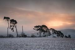 Winter Awakening (.Brian Kerr Photography.) Tags: winter snow cold landscape photography scotland southlanarkshire elvanfoot scotspines trees sunrise sonyuk a7rii visitscotland
