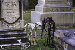 An Unexpected Surprise -- Explored (houndstooth4) Tags: dog greyhound flattery dogchal ddc odc