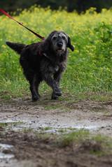 Unser Hund (Cologne-Soul) Tags: hund mischling spaziergang natur dog nature animal