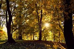 Park of Decjusz (joanna_l95) Tags: cracow krakow park decjusz autumn fall