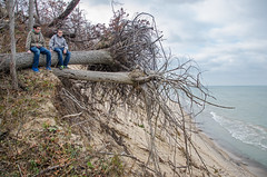 Uprooted Perch (Tom Gill.) Tags: dune beach lake lakemichigan greatlakes uprooted trees indiana indianadunesnationallakeshore