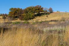 Oak Savanna (NetAgra) Tags: grass dogpark blue savanna wisconsin tallgrass danecounty trees sky sun autumn fall oak prairie