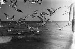 (bettsdg) Tags: blackwhite bw blackandwhite olympus om10 kodak tmax 400sa vama veche romania seaside 50mm film analogue seagull sea beach monochrome nature mare spiaggia gabbiani natura bianconero analogico