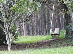 DSCN0343 (apacheizabel) Tags: lago pssaros rvores cu pinhas tronco espelho dgua queroquero rolinhas banco no bosque famlia de galinhas passeio parque centro aeroespacial da aeronutica cta so jos dos campos sp