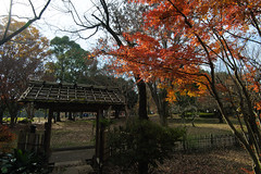 20161204-DS7_6530.jpg (d3_plus) Tags:  a05 wideangle d700 thesedays  architecturalstructure   kanagawapref   sky park autumnfoliage  japan   autumn superwideangle dailyphoto nikon tamronspaf1735mmf284dild  street daily  architectural  fall tamronspaf1735mmf284dildaspherical touring streetphoto  nikond700 tamronspaf1735mmf284 scenery building nature   tamron1735   tamronspaf1735mmf284dildasphericalif   autumnleaves
