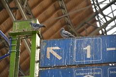 Duivendrek (snoeziesterre) Tags: nvbs sne treinreizen treinen hongarije hungary boedapest budapest trains traintravels railwaystation stations stationsgebouw duiven pidgins