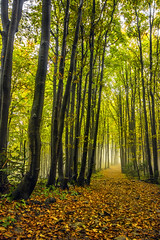 Forest (Emsibi) Tags: forest foggy colors autumn leaves leav green yellow oran