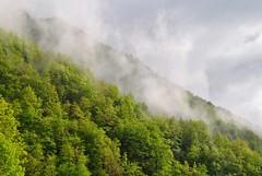 Couleurs et brumes du printemps. (Claudia Sc.) Tags: pyrénées midipyrénées ariège estours france seix printemps forêt nuages montagne