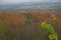Wandern im Siebengebirge (Na_also_geht_doch) Tags: rhein bonn wein weinberg herbst wald autumn wandern hiking landscape siebengebirge nature