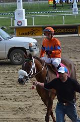 2016-11-06 (48) r3 Horacio Karamanos on #8 Marabea at Laurel Park - winner (JLeeFleenor) Tags: photos photography md marylandhorseracing racing track laurelpark horaciokaramanos jockey   jinete  dokej jocheu  jquei okej kilparatsastaja rennreiter fantino    jokey ngi horses thoroughbreds equine equestrian cheval cavalo cavallo cavall caballo pferd paard perd hevonen hest hestur cal kon konj beygir capall ceffyl cuddy yarraman faras alogo soos kuda uma pfeerd koin    hst     ko  winner