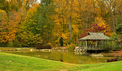 tea house (CU TEO MD) Tags: house lake landscape maryland garden trees ngc naturebynikon nikon d500 twop soe artofimages simplysuperb grass leaves autumn foliage nature explore
