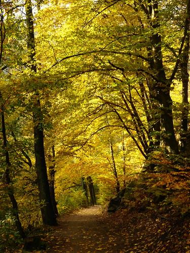 Na podzim z Vochtánky podél Divoké Orlice - Potštejn - CZECH REPUBLIC