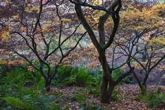 Twisted (sarah_presh) Tags: twisted trees autumn england winkworth winkwortharboretum surrey nikond750