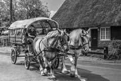 Horse and Cart Rides (clivea2z) Tags: unitedkingdom england hampshire southwick horses workinghorses countrylife horseandcart shirehorses tonemapped