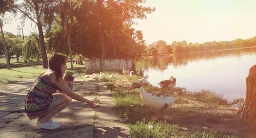 Quack 🐤💛