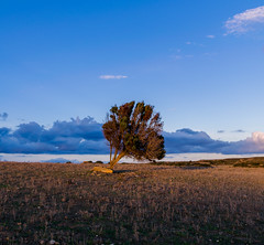 Tree on a Square (Athrandel) Tags: land landscape landscapes nature green tree trees sky skies cloud clouds infra infrared ir colour colours colors colorful dramatic mood field fields