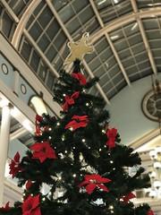 Christmas #photo #photography #photoofday #photooftoday #photooftheday #iphone #iphone7plus #iphonephoto #enlightapp #enlight # # #life #madrid #night #sansebastiandelosreyes #anochecer #espaa #christmas #navidad #instagram #christmastree #arbol (Adrin Lahoz) Tags: photo photography photoofday photooftoday photooftheday iphone iphone7plus iphonephoto enlightapp enlight life madrid night sansebastiandelosreyes anochecer espaa christmas navidad instagram christmastree arbol