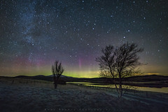 Aurora & Milky Way,Clatteringshaws Loch (Dooj Brawls Photography) Tags: aurora astrophotography milkyway nightphotography nightsky nightime night nightscapes sky stars northern lights trees tree astronomy clatteringshaws frosty frost dark skies dumfries galloway scotland canon 6d samyang 14mm f28