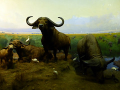 American Museum of Natural History New York November 2016 (18) (Richie Wisbey) Tags: american museum natural history upper west side new york city usa central park night exhibits dumdum dum monkey dinosaur bones fossils explore vast building easter island head theodore teddy roosevelt animals richard wisbey richie flickr