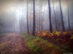 GR II (Guillermo Carballa) Tags: forest woods trees pines ferns colors fog mist light carballa lx5