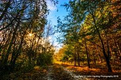The Path To The Wetlands (T i s d a l e) Tags: tisdale pathtothewetlands farm wetlands fall autumn november 2016 easternnc