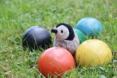 214 Bippy (AluminumDryad) Tags: blue orange black oneaday grass yellow penguin balls mascot photoaday croquet pictureaday travelingtoy fingerpuppet folkmanis woodenballs project365 project365214 project365080215 franklintrek