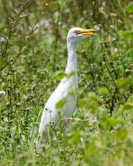 20150829-_74P5437.jpg (Lake Worth) Tags: bird nature birds animal animals canon wings florida outdoor wildlife feathers wetlands everglades waterbirds southflorida xextender sigma120300f28dgoshsmsports