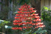 IMG_2477 (Cthonus) Tags: geotagged malaysia borneo longhouse rungus runguslonghouse
