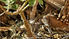 . . #_ #goodmorning # # #flower #bird  #_ # # # #  # # #  #ksa #photo #sonyalpha #zoom300  #sony #camera #bird #animal #animals  #  #l4l #like4like #ksa #saudiarabia # # (photography AbdullahAlSaeed) Tags: camera flower bird animal animals photo sony goodmorning saudiarabia  l4l ksa  zoom300       sonyalpha   like4like