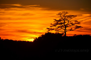 sunset and the lone tree