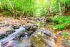Green forest (Nejdet Duzen) Tags: trip travel tree green nature water forest turkey stream türkiye su yeşil ağaç dere orman turkei tesvikiye seyahat yalova doğa çınarcık