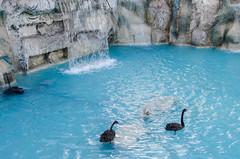 Konya - Cultural Park Waterfall Sultanah Caddesi (Le Monde1) Tags: park turkey waterfall nikon islam sultan turkish dervish anatolia moslem whirlingdervishes culturalpark kltr sinanpasha d7000 lemonde1 hasanpasha sultanahcaddesi fatmahtun