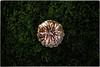 ... IMG_9609 (*melkor*) Tags: art halloween nature grass rain pumpkin geotagged moss october dof experiment naturallight conceptual melkor smallpumpkin trashbit