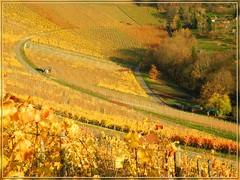Weinbergkurve (almresi1) Tags: autumn stuttgart herbst vineyards rotenberg weinberge