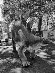 Cleveland Museum of Natural History 08-21-2015 - Stegosaurus Statue 3 HDR BW (David441491) Tags: blackandwhite bw statue dinosaur stegosaurus hdr clevelandmuseumofnaturalhistory