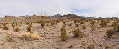 Chihuahuan Desert View