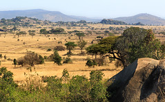 Kopje View (AnyMotion) Tags: africa travel nature rock landscape tanzania reisen wildlife natur afrika savannah landschaft felsen savanna kopje tansania 2015 savanne serengetinationalpark felsformation anymotion landschaftsaufnahmen 7d2 simbakopjes felseninsel morukopjes canoneos7dmarkii