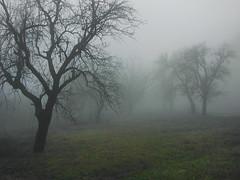 Mist (R_Ivanova) Tags: nature landscape mist autumn fall tree rivanova bulgaria българия риванова природа мъгла есен