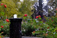 Fuente. (ad_n61) Tags: flores blanco luz de hojas ventana navidad calle arquitectura agua y gente comida negro flor fuente ciudad modelo personas zaragoza perro fujifilm fuego balcon diciembre dulce maquina adornos escribir 2015 vantanas xt1 verdemercadillo