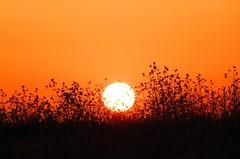 Sunset (Francesco Impellizzeri) Tags: sunset italy canon sicily trapani