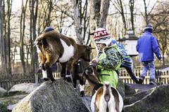 Erding (Lauter1986) Tags: germany bayern deutschland europa stadtpark erding