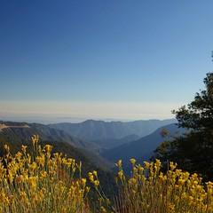 Power Power (GrisParr) Tags: losangelescresthighway california mountains flowers flora skyline landscape nature outdoors summer usa ride scenery